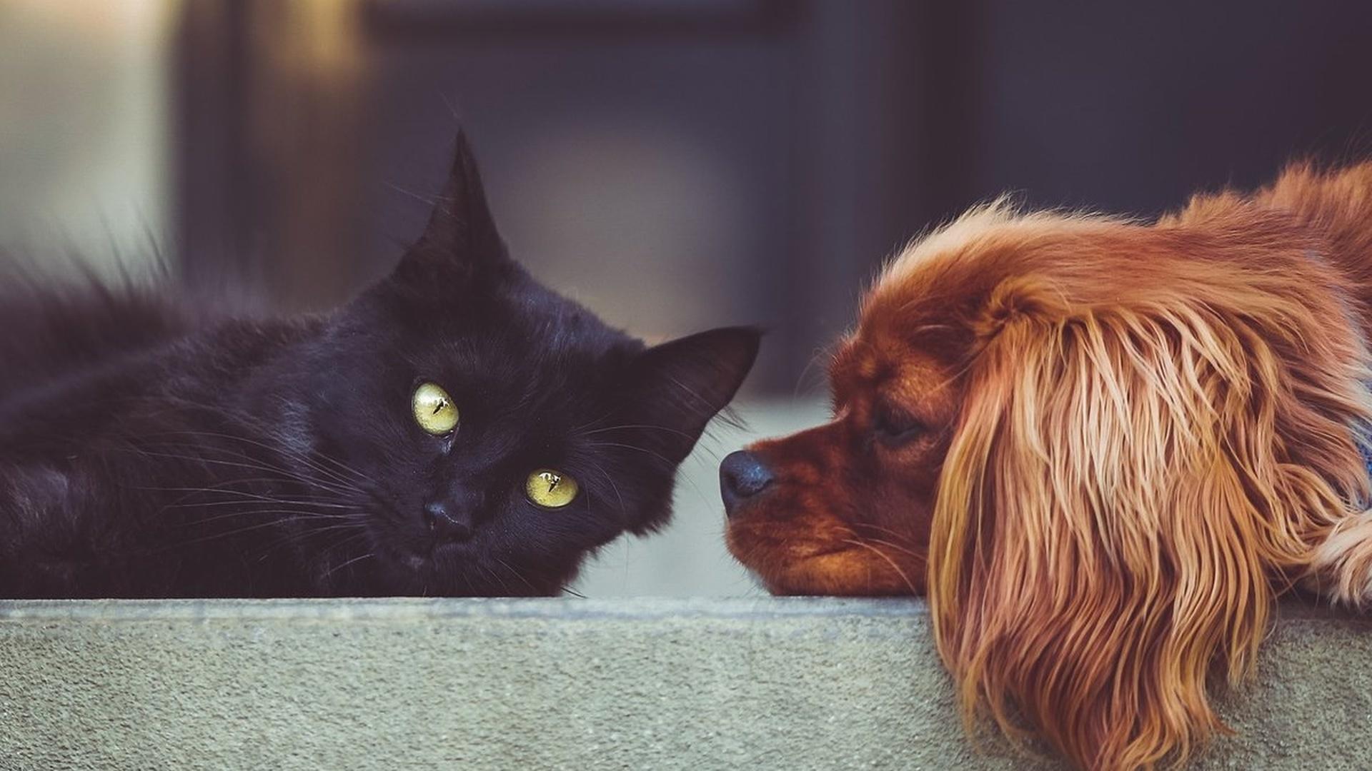 Ушной клещ у собак и кошек