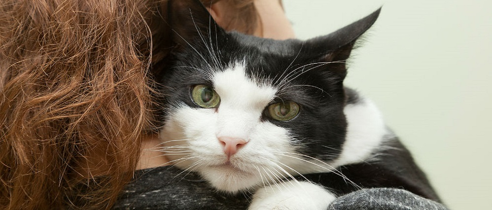 У кошки слезится глаз: причины