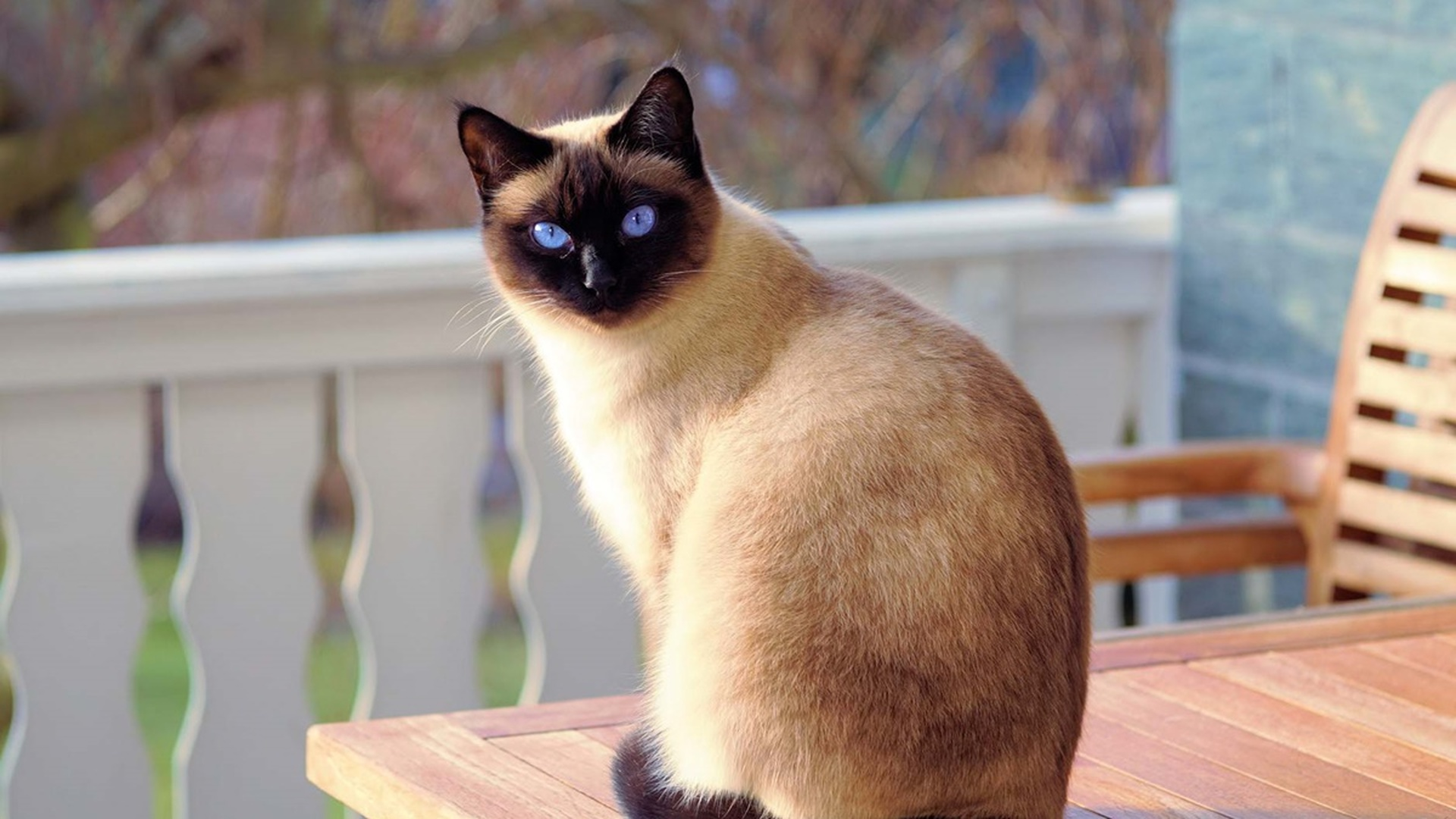 Симптомы цистита у кошек.