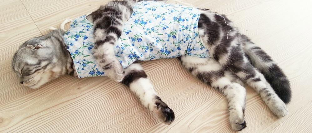 Как проводится операция по стерилизации кошки