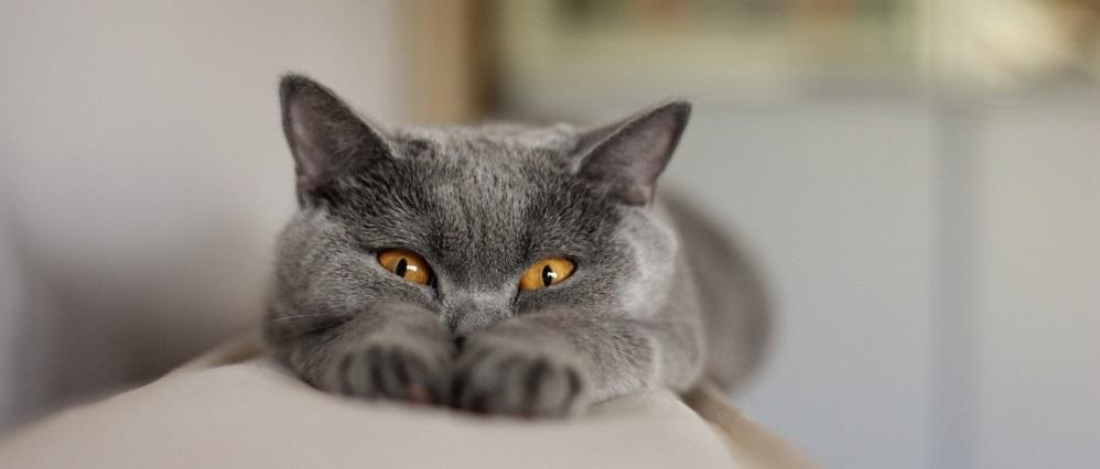 Стерилизация кошек: всё, что необходимо знать о стерилизации
