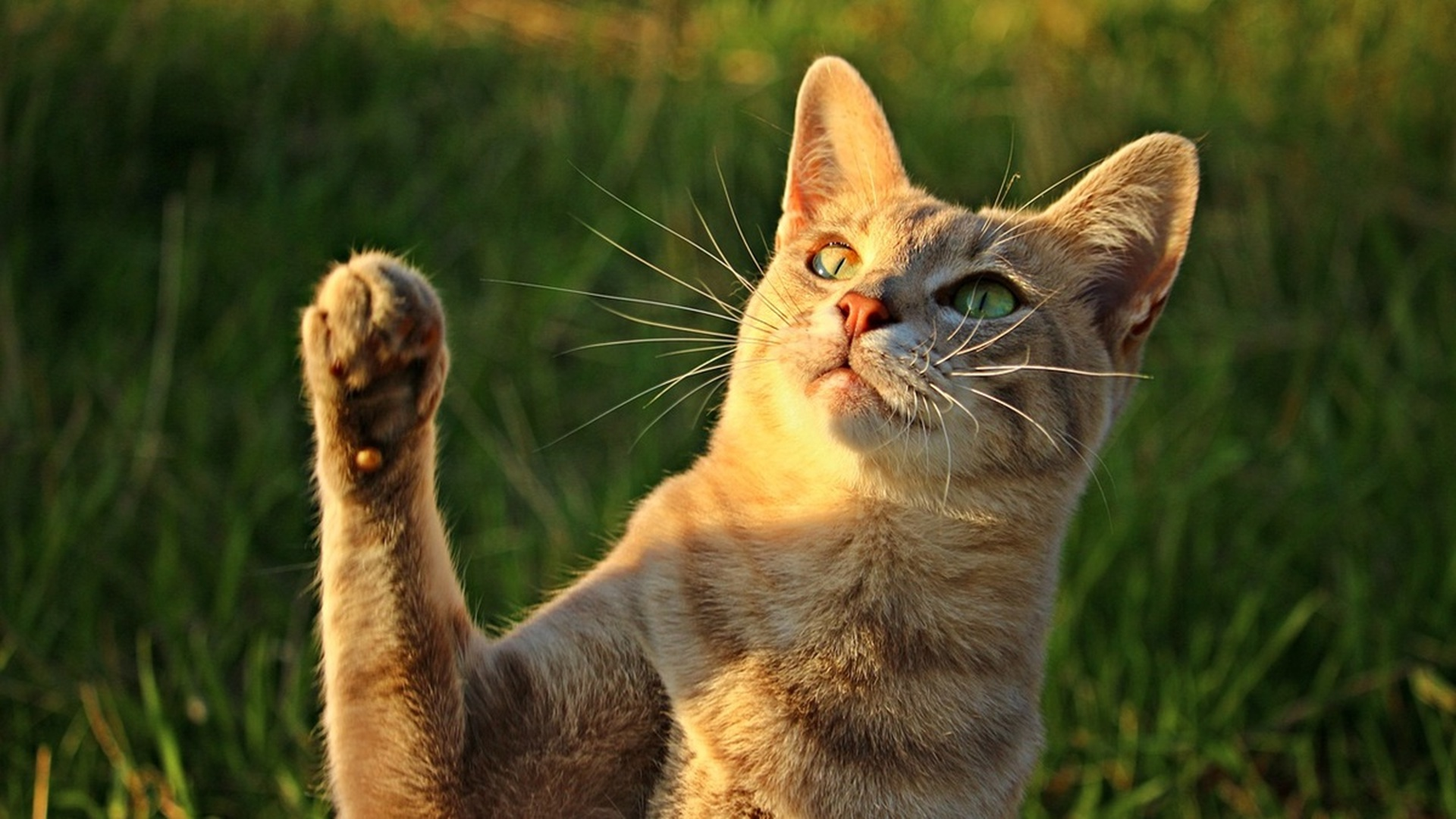 Особенности питания кошек