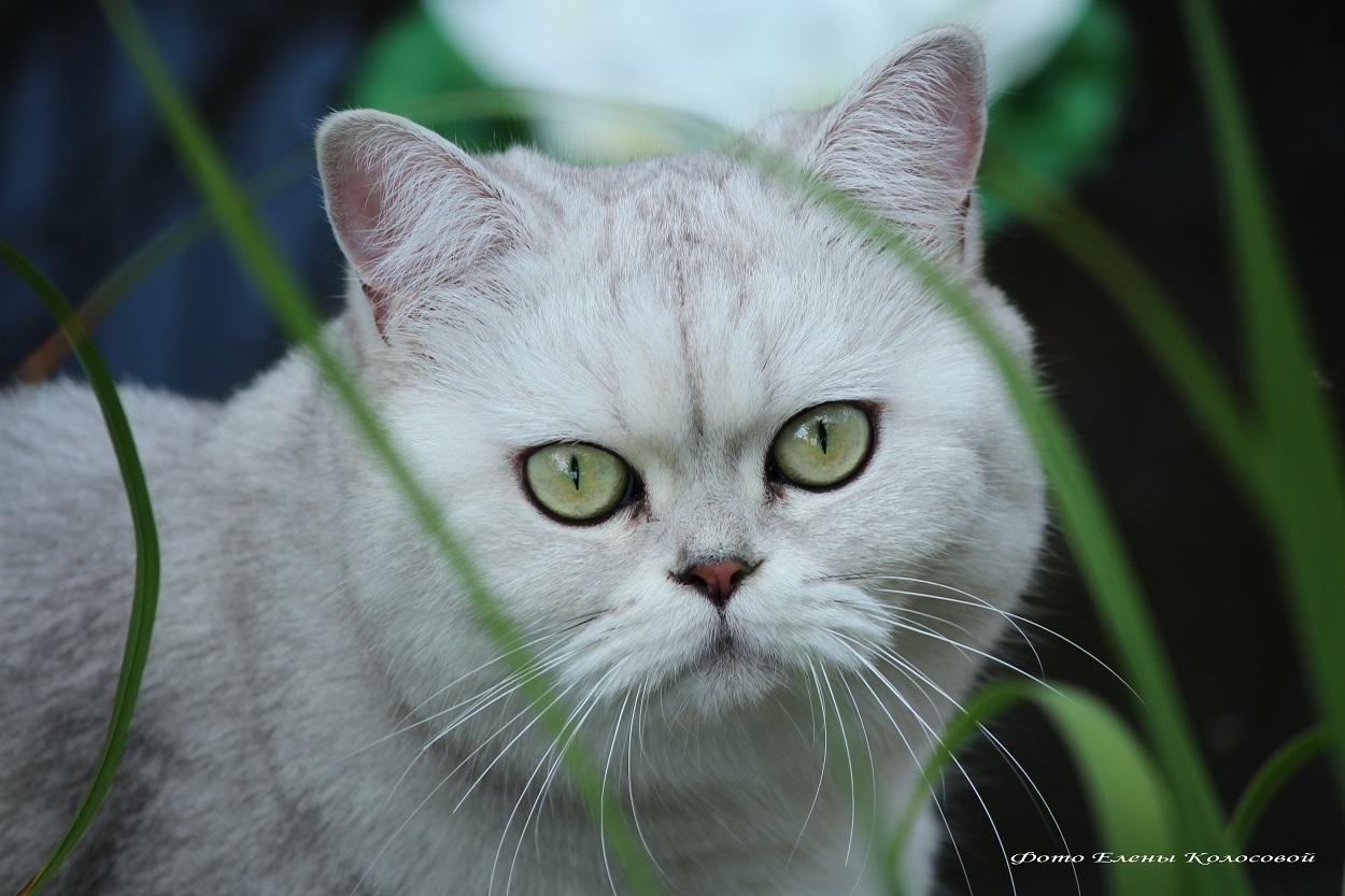 стрижку кошек в Воскресенске