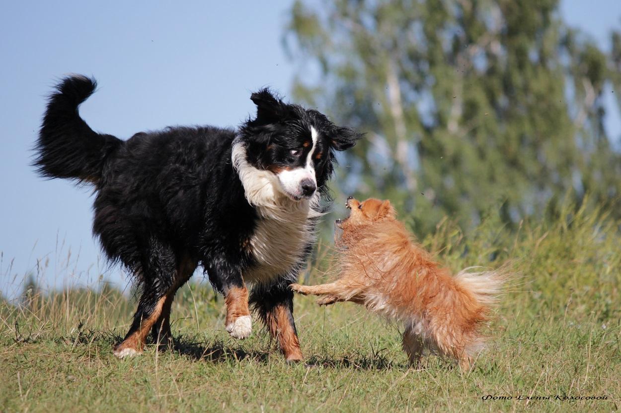 прививки делают собакам, цены и тонкости