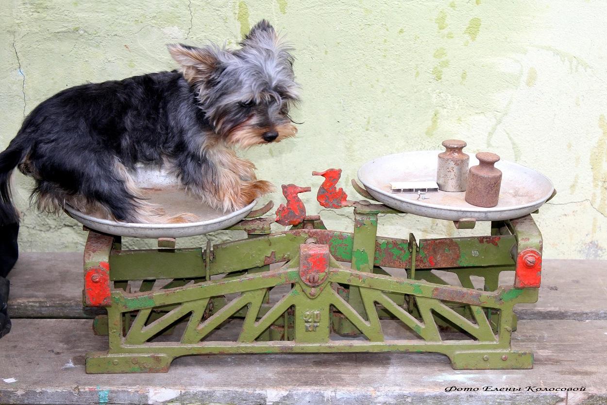 лечить стригущий лишай у собаки