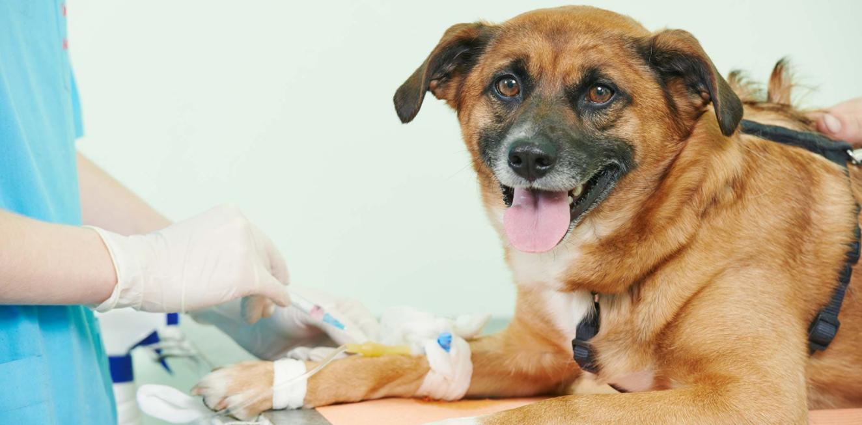 Анализ крови у собак
