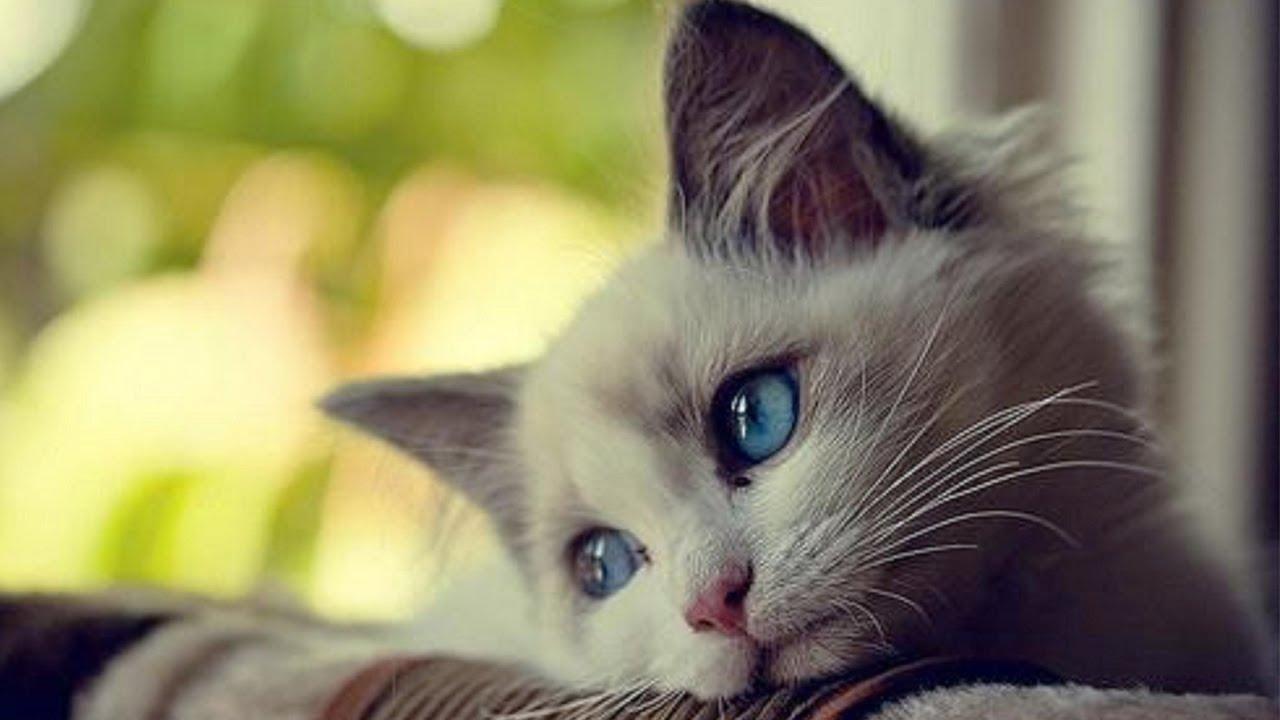 болезни глаз у собак и кошек