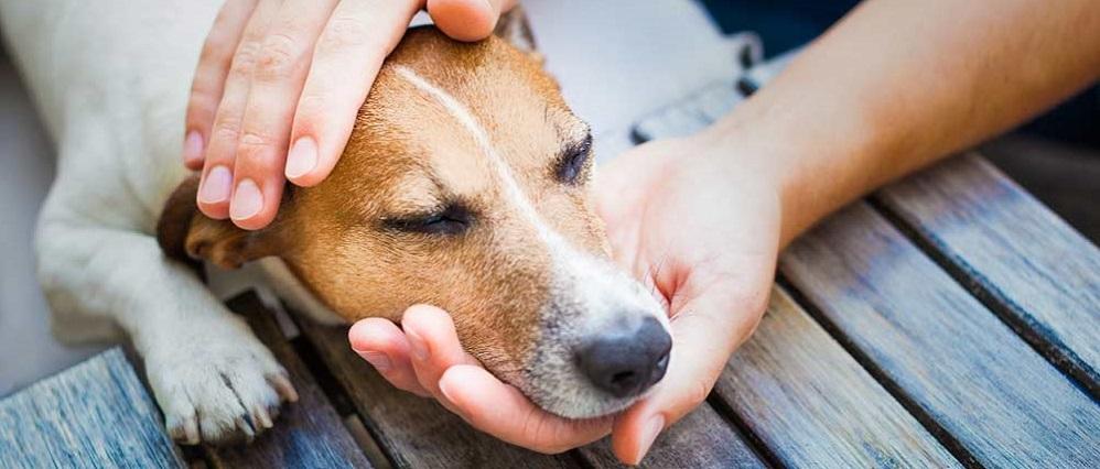 Лишай у собак, лечение
