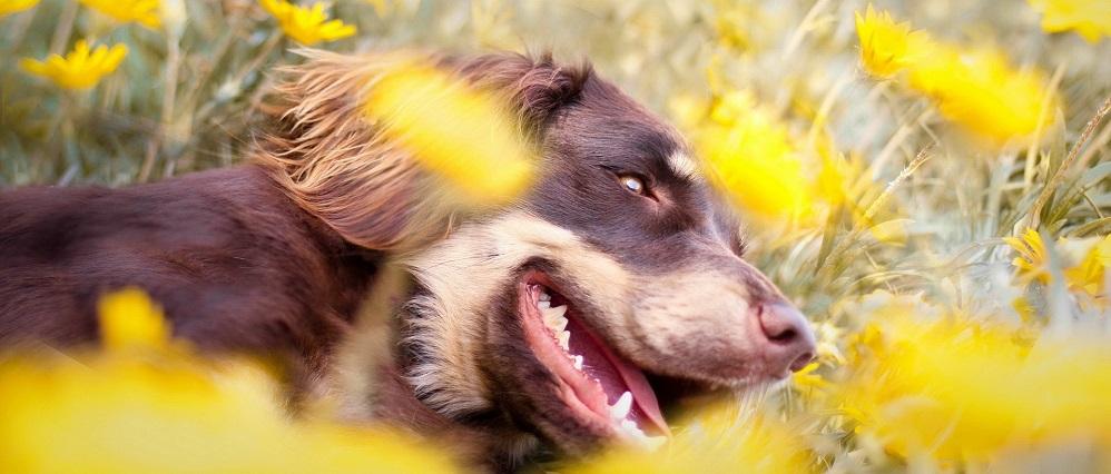 чистка зубов собаке ультразвуком