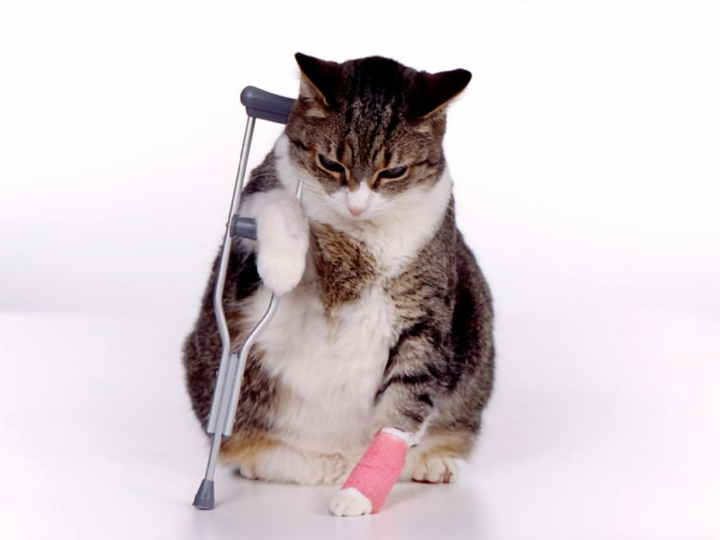 Ветеринарная травматология