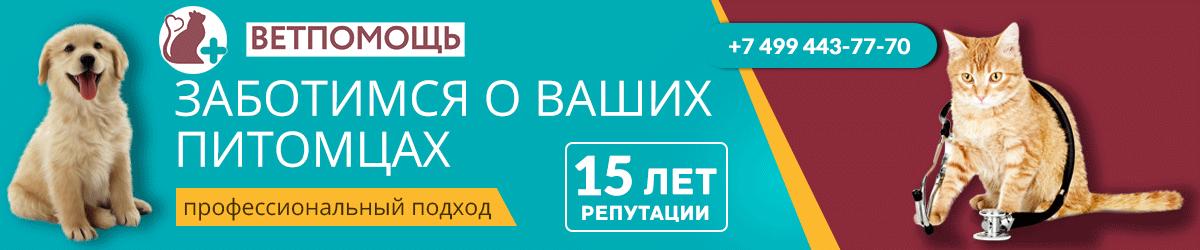 Клиниа Ветпомощь Воскресенск. 15 лет репутации